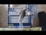 Лучшая игрушка для попугая